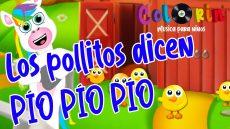 Cancion para niños - Los pollitos dicen pio pio pio - Colorin Cuenta